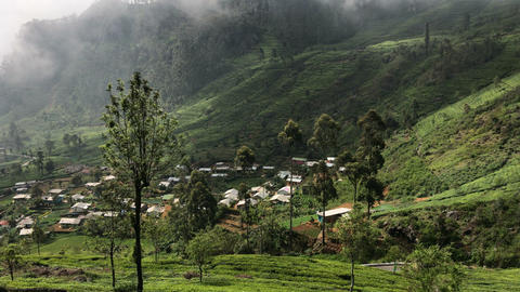 Green Village View, Tea Plant Footage
