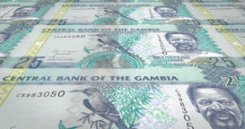 Banknotes of twenty five gambian dalasis of Gambia rolling, cash money, loop Animation