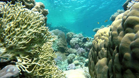 Life under the water. Warm tropical sea. The world under water Footage
