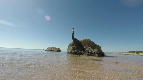 The Bird On The Shore Of A Tropical Sea stock footage