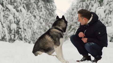 A man hugs his Siberian husky in the forest. In the background trees in the snow Footage