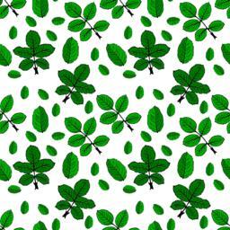 drawn green rose leaves ベクター