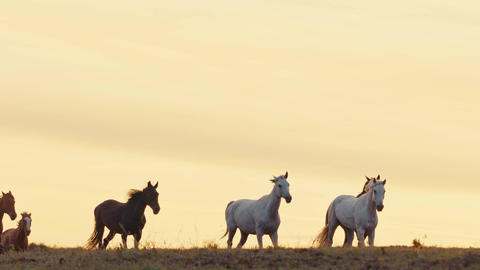 Horses running on a grass field Footage