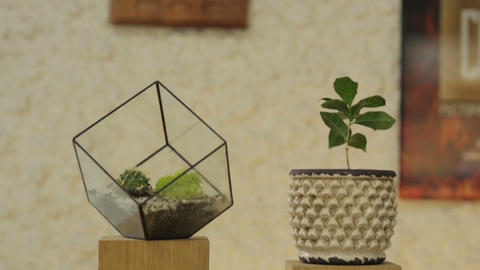 Pot with Flower and Glass Cube 画像