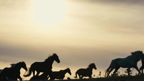 Horses running on a grass field Live Action
