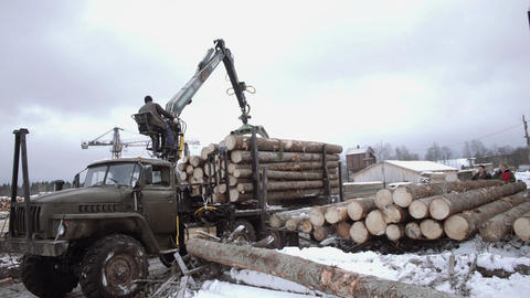 Heavy claw loader unloads wood logs from heavy truck at sawmill facility Live Action
