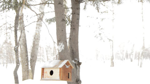 Wooden birdhouse on the trunk of a fir tree, care for squirrels and wild birds Footage