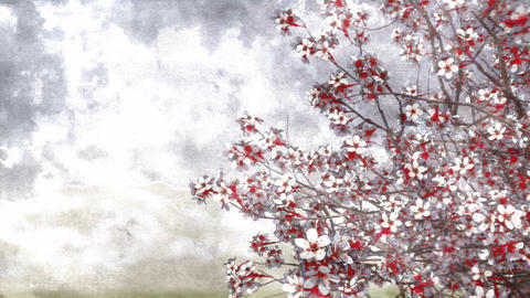 Sakura cherry blossom watercolor background Animation