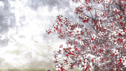 Blooming sakura cherry watercolor art style Animation
