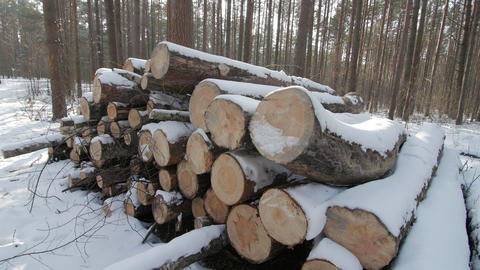 Wooden Logs Covered With Snow on the Ground in the Forest Footage