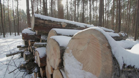Wooden Logs Covered With Snow on the Ground in the Forest Image