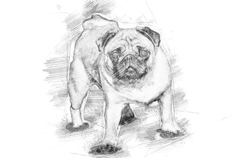 A beautiful pug stands in the meadow - sketch style フォト