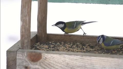 Birds in feeder Slow motion Footage