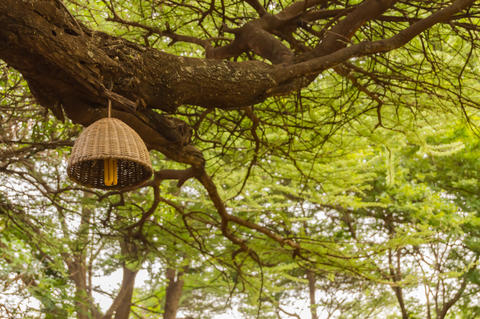 Basket-shaped electric suspension hanging from the branch of a t Fotografía