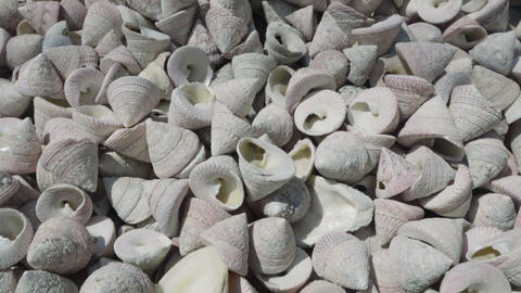 slow motion pan video of Sea shells Footage