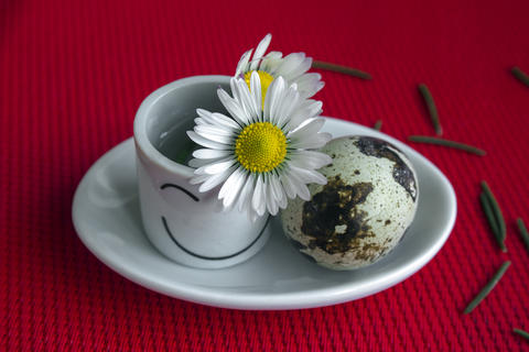 Between Spring and Winter. Still life with daisies Photo