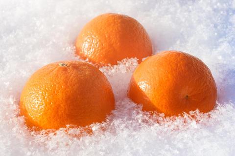 Fresh orange mandarins in snow Photo