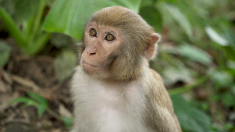 Portrait of a monkey in the jungle Live Action