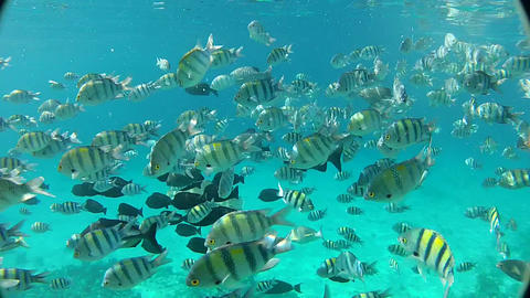 Underwater, Diving on a tropical reef Footage