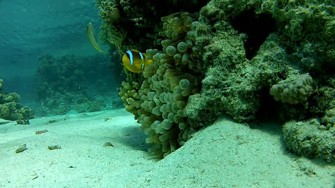 Diving on a tropical reef. Warm tropical sea Live Action