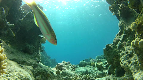 Coral reef. Colorful corals Footage