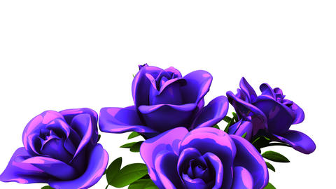 Blue Roses Bouquet On White Text Space Animación