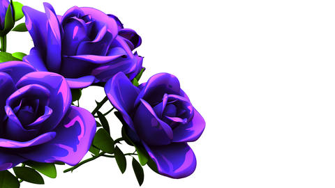Blue Roses Bouquet On White Text Space Animation