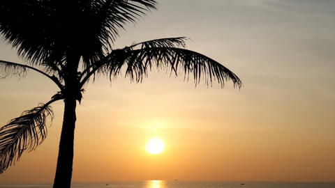 Palm tree in the evening sunset on the sea Footage