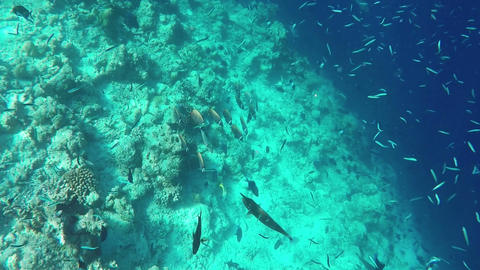 Fishes and Colorful Corals at the Beautiful of Maldives Archivo