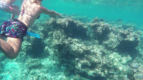 Colorful Corals and Fishes at the Beautiful Tropical Island of Maldives Footage