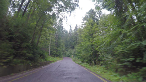 POV of amazing green forest landscape seen from car window traveling on wood Footage
