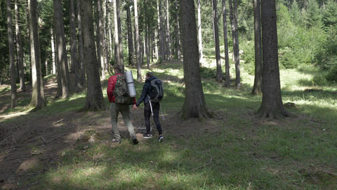 Young couple with backpacks holding hands trekking on forest path looking for a Footage