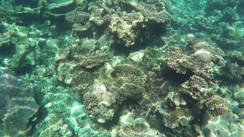 Colorful Fishes and Corals at the Beautiful Tropical Island of Maldives Archivo