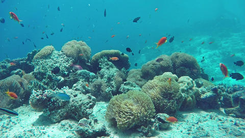 Underwater Colorful Fishes and Corals in the Beautiful Tropical Island of Archivo