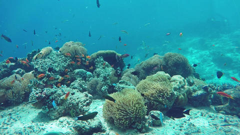 Underwater Colorful Fishes and Corals in the Beautiful Tropical Island Footage