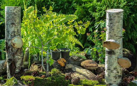 Miniature autumn garden フォト