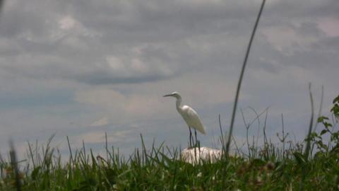 birds Footage