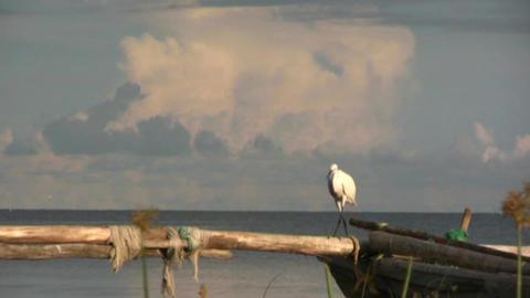 birds Stock Video Footage