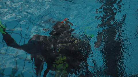 diving pool 08 Stock Video Footage