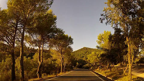 Forest road POV from car moving at sunset, timelapse Footage