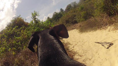 Time-lapse of Dog walk to Beach Stock Video Footage