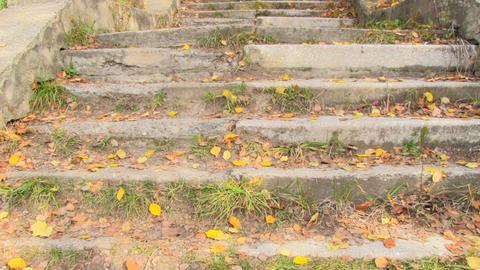 autumn park Stock Video Footage