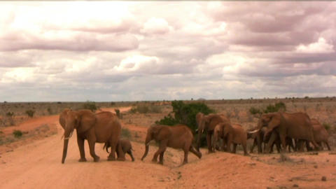 elephants Footage