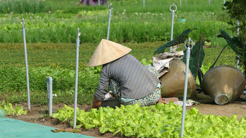 Vietnamese lady working at the countryside Footage