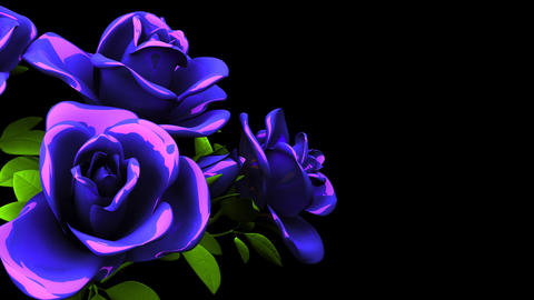 Blue Roses Bouquet On Black Text Space Animation