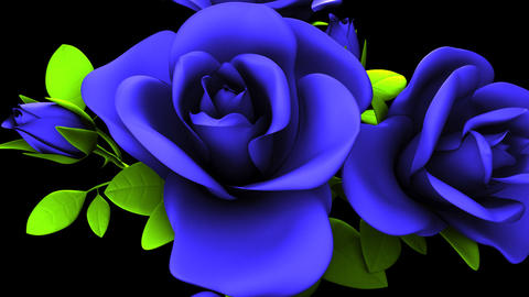 Blue Roses Bouquet On Black Background CG動画素材