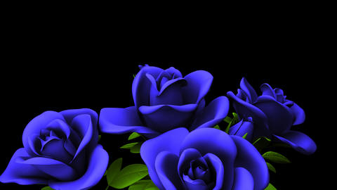 Blue Roses Bouquet On Black Text Space CG動画