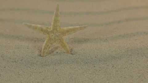 Approaching the yellow starfish standing on the sand dunes. Dolly shot Footage