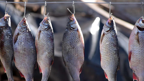 The river salted fish hangs on an iron jug and is dried Live Action