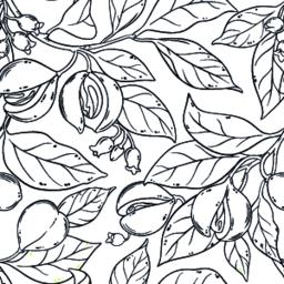 nutmeg seamless pattern Vector
